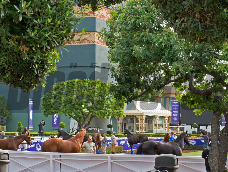 Paddock crowd of schoolers<br /> Works at Santa Anita in preparation for 2016 Breeders' Cup on Nov. 1, 2016, in Arcadia, CA.