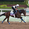 Daddys Lil Darlin, Juvenile Fillies<br /> Works at Santa Anita in preparation for 2016 Breeders' Cup on Oct. 29 2016, in Arcadia, CA.