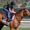 Caption:  Wise Dan on the turf course <br /> Breeders' Cup horses and connections at Santa Anita near Acadia, California, preparing for Breeders' Cup raceways on Nov. 1 and Nov. 2, 2013.<br /> BCWorks3Jpegs_10_31_13 image068<br /> Photo by Anne M. Eberhardt