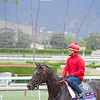 Not this Time in Juvenile<br /> Works at Santa Anita in preparation for 2016 Breeders' Cup on Oct. 29 2016, in Arcadia, CA.