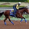 One Lucky Dane with Dana Barnes for Bob Baffert on Oct. 26, 2014, at Santa Anita in preparation for the Breeders' Cup.<br /> 2Origs10_26_14 image350<br /> Anne M. Eberhardt photo