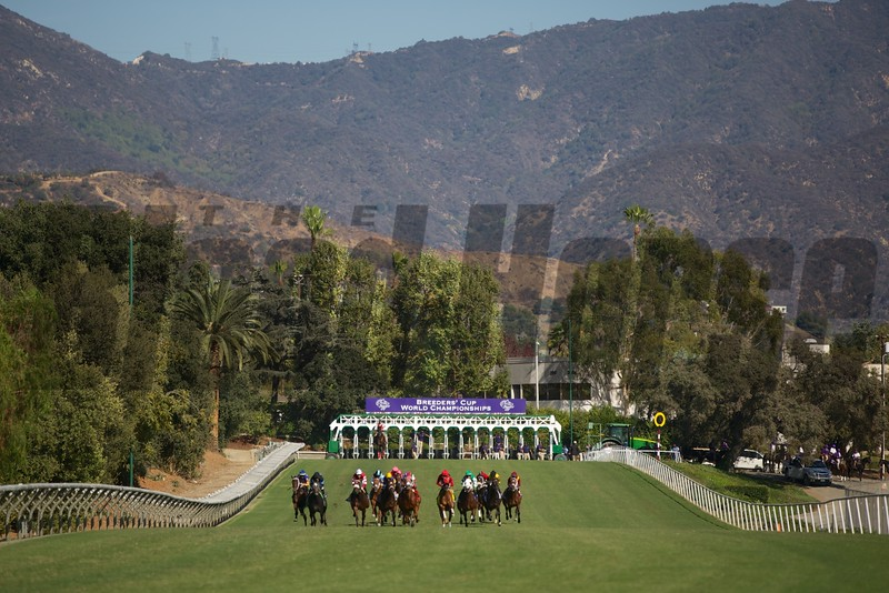 The horses ran down the hill in the GEICO Breeders' Cup Turf Sprint (G. I). Photo by Crawford Ifland.