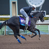 Big Score<br /> Works at Santa Anita in preparation for 2016 Breeders' Cup on Oct. 31, 2016, in Arcadia, CA.