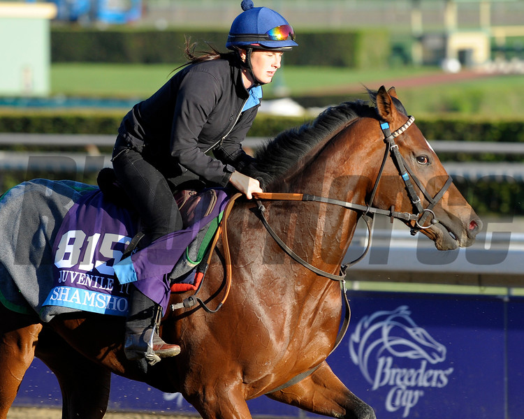 Caption:  Shamshon<br /> Breeders' Cup horses and connections at Santa Anita near Acadia, California, preparing for Breeders' Cup raceways on Nov. 1 and Nov. 2, 2013.<br /> BCWorks1Jpegs_10_30_13 image274<br /> Photo by Anne M. Eberhardt