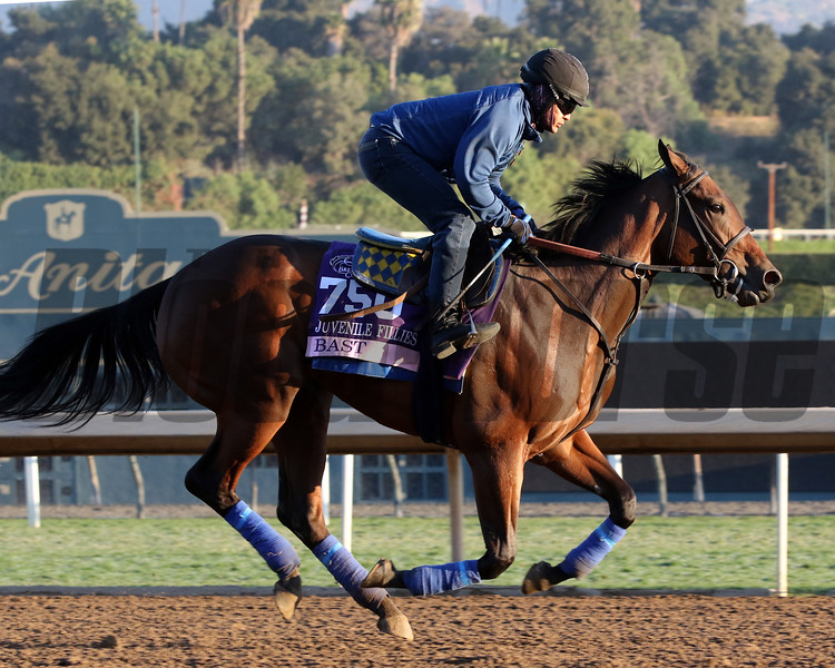 Bast at Santa Anita Park on October 31, 2019. Photo By: Chad B. Harmon