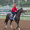 Not This Time, Juvenile.<br /> Works at Santa Anita in preparation for 2016 Breeders' Cup on Oct. 29 2016, in Arcadia, CA.