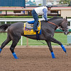 Arrogtate<br /> Works at Santa Anita in preparation for 2016 Breeders' Cup on Oct. 30, 2016, in Arcadia, CA.