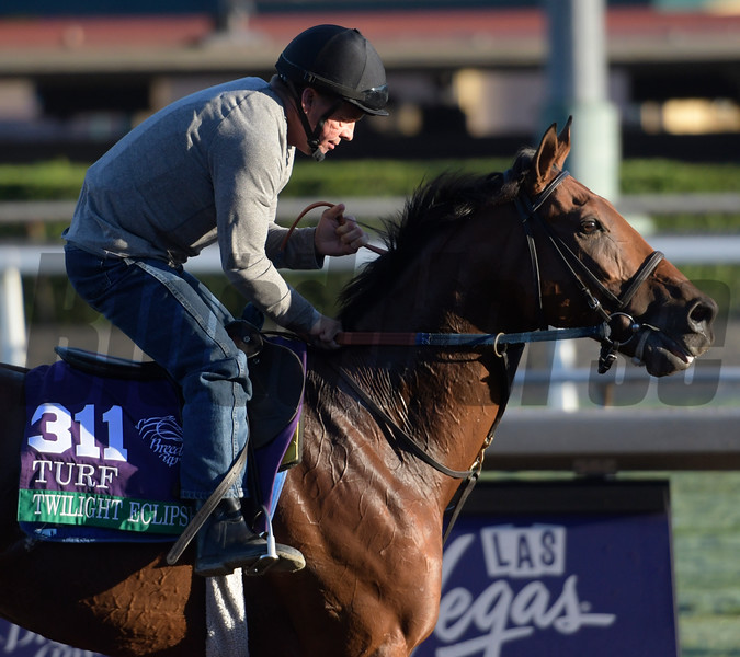 Twilight Eclipse is out for a gallop at Santa Anita Nov. 2, 2016 in preparation for his appearance in the Breeders' Cup in Arcadia, California.  Photo by Skip Dickstein