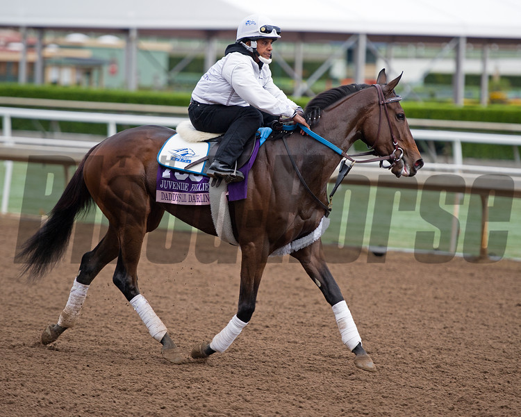 Daddys Lil Darling<br /> Works at Santa Anita in preparation for 2016 Breeders' Cup on Oct. 31, 2016, in Arcadia, CA.