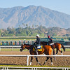 Caption:  Mucho Macho Man and the San Gabriel Mountains at Santa Anita<br /> Breeders' Cup horses and connections at Santa Anita near Acadia, California, preparing for Breeders' Cup raceways on Nov. 1 and Nov. 2, 2013.<br /> BCWorks01_10_26_13 RAWimage763<br /> Photo by Anne M. Eberhardt