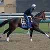 Caption:  Cleburne<br /> Breeders' Cup horses and connections at Santa Anita near Acadia, California, preparing for Breeders' Cup raceways on Nov. 1 and Nov. 2, 2013.<br /> BCWorks01_10_25_13 JPEGSimage507<br /> Photo by Anne M. Eberhardt