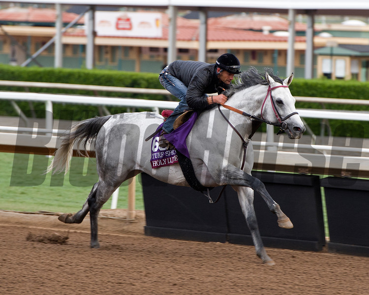 Holylute<br /> Works at Santa Anita in preparation for 2016 Breeders' Cup on Nov. 1, 2016, in Arcadia, CA.