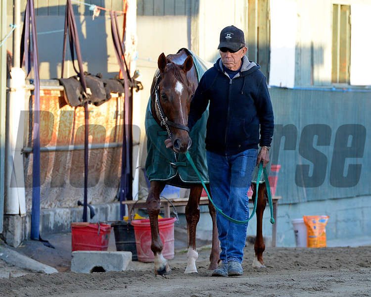 Caption: Starspangled Heat<br /> Scenes at Santa Anita  on Oct. 29, 2014, in preparation for Breeders' Cup  in California.<br /> 1Origs10_29_14 image625<br /> Photo by Anne M. Eberhardt