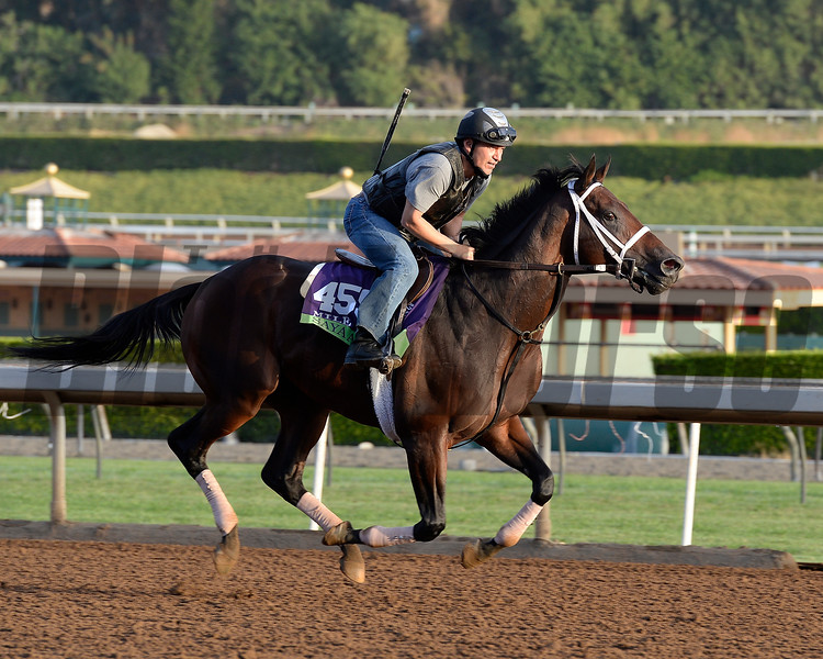 Caption:  Sayaad<br /> Scenes at Santa Anita in preparation for Breeders' Cup  in California on Oct. 27, 2014.<br /> 1Origs10_27_14 image86<br /> <br /> 684<br /> Photo by Anne M. Eberhardt