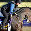 Caption:  Close Hatches<br /> Breeders' Cup horses and connections at Santa Anita near Acadia, California, preparing for Breeders' Cup raceways on Nov. 1 and Nov. 2, 2013.<br /> BCWorks1Jpegs_10_30_13 image369<br /> Photo by Anne M. Eberhardt