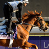 Caption:  Rosalind<br /> Breeders' Cup horses and connections at Santa Anita near Acadia, California, preparing for Breeders' Cup raceways on Nov. 1 and Nov. 2, 2013.<br /> BCWorks1Jpegs_10_30_13 image302<br /> Photo by Anne M. Eberhardt