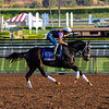 Caption:  Carve<br /> Scenes at Santa Anita in preparation for Breeders' Cup  in California on Oct. 27, 2014.<br /> 1Origs10_27_14 image764<br /> Photo by Anne M. Eberhardt