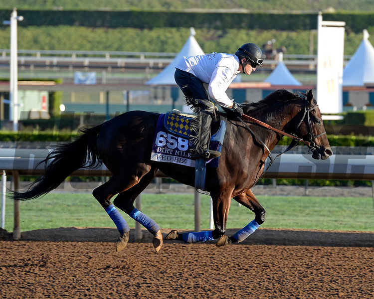 Caption:  Fed Biz<br /> Scenes at Santa Anita  on Oct. 27, 2014, in preparation for Breeders' Cup  in California.<br /> 1Origs10_28_14 image311<br /> Photo by Anne M. Eberhardt
