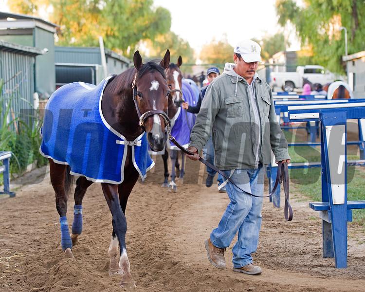 Songbird<br /> Morning scenes at Santa Anita in preparation for 2016 Breeders' Cup on Nov. 2, 2016, in Arcadia, CA.