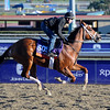 Caption:  Tightend Touchdown<br /> Breeders' Cup horses and connections at Santa Anita near Acadia, California, preparing for Breeders' Cup raceways on Nov. 1 and Nov. 2, 2013.<br /> BCWorks1Jpegs_10_31_13 image893<br /> Photo by Anne M. Eberhardt