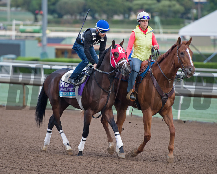 Kitten's Cat<br /> Works at Santa Anita in preparation for 2016 Breeders' Cup on Oct. 31, 2016, in Arcadia, CA.
