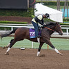 Term of Art<br /> Works at Santa Anita in preparation for 2016 Breeders' Cup on Oct. 31, 2016, in Arcadia, CA.