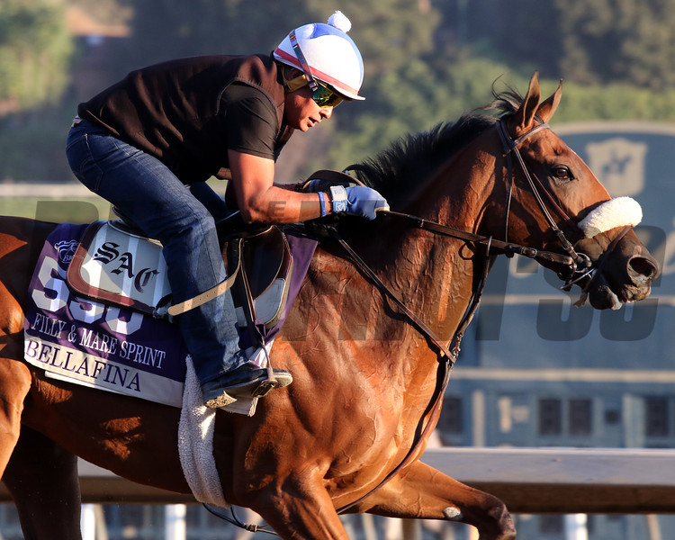 Bellafina at Santa Anita Park on October 31, 2019. Photo By: Chad B. Harmon