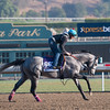 Caption:  Holy Lute<br /> Breeders' Cup horses and connections at Santa Anita near Acadia, California, preparing for Breeders' Cup raceways on Nov. 1 and Nov. 2, 2013.<br /> BCWorks01_10_26_13 RAWimage682<br /> Photo by Anne M. Eberhardt