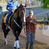 Caption:  Cigar Street<br /> Scenes at Santa Anita  on Oct. 27, 2014, in preparation for Breeders' Cup  in California.<br /> 1Origs10_28_14 image454<br /> Photo by Anne M. Eberhardt