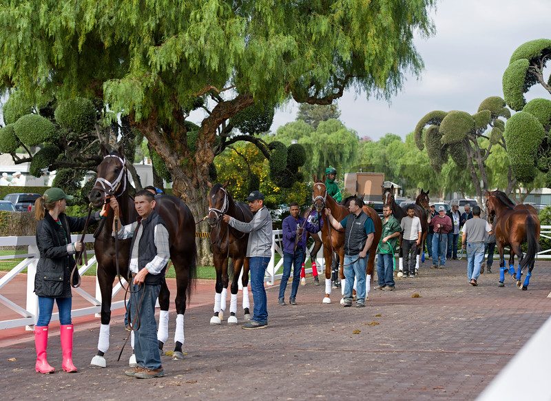 Horses lined up to go into a crowded paddock for schooling.<br /> Scenes at Santa Anita in preparation for 2016 Breeders' Cup on Nov. 1, 2016, in Arcadia, CA.
