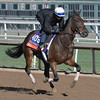 Sea Calisi is out for a gallop at Santa Anita Nov. 2, 2016 in preparation for his appearance in the Breeders' Cup in Arcadia, California.  Photo by Skip Dickstein