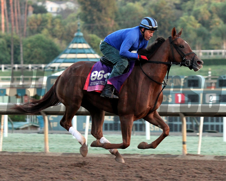 Victory To Victory Breeders' Cup Juvenile Fillies Turf Chad B. Harmon