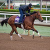 Gomo<br /> Works at Santa Anita in preparation for 2016 Breeders' Cup on Oct. 31, 2016, in Arcadia, CA.