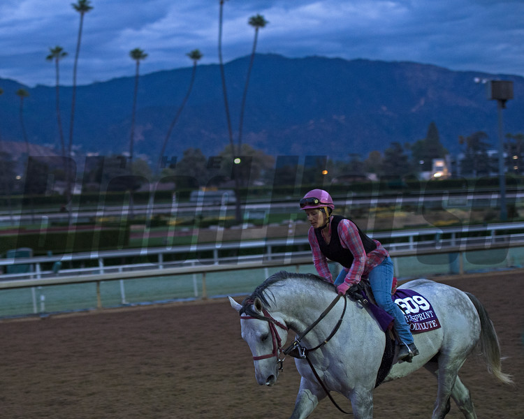 Holylute.<br /> Works at Santa Anita in preparation for 2016 Breeders' Cup on Oct. 29 2016, in Arcadia, CA.