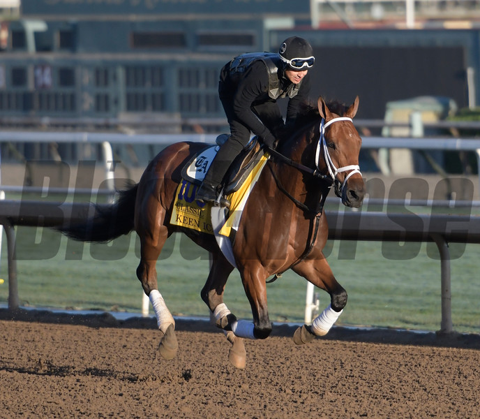 Keen Ice gallops at Santa Anita Nov. 2, 2016 in preparation for his appearance in the Breeders' Cup in Arcadia, California.  Photo by Skip Dickstein