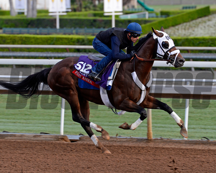 Fast Anna works on Oct. 26, 2014, at Santa Anita in preparation for the Breeders' Cup.<br /> Anne M. Eberhardt photo