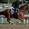 Caption:  Vagabond Shoes<br /> Breeders' Cup horses and connections at Santa Anita near Acadia, California, preparing for Breeders' Cup raceways on Nov. 1 and Nov. 2, 2013.<br /> BCWorks1Jpegs_10_29_13 image596<br /> Photo by Anne M. Eberhardt
