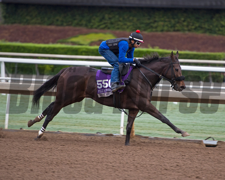 By the Moon<br /> Works at Santa Anita in preparation for 2016 Breeders' Cup on Oct. 31, 2016, in Arcadia, CA.
