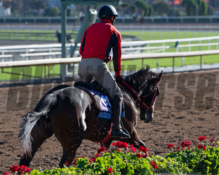 Full Flat<br /> Horses and scenes at  Oct. 26, 2019 Santa Anita in Arcadia, CA.