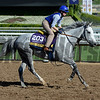 Caption:  L'Amour de Ma Vie<br /> Scenes at Santa Anita in preparation for Breeders' Cup  in California on Oct. 27, 2014.<br /> 2Origs10_27_14 image141<br /> Photo by Anne M. Eberhardt