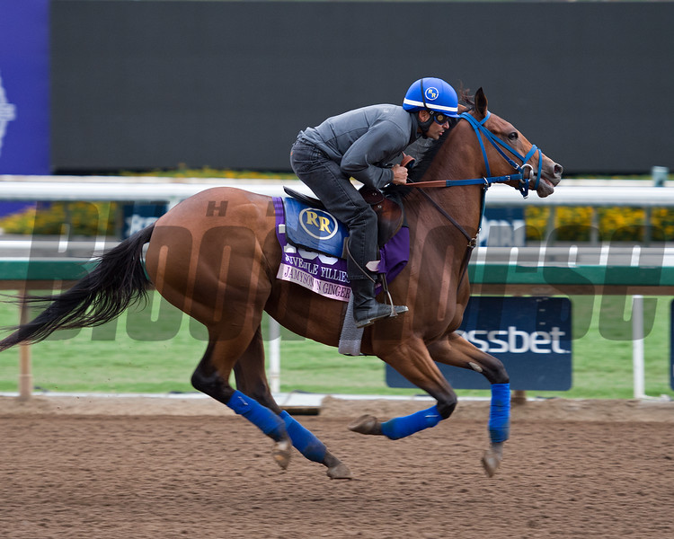 Jamyson'n Ginger<br /> Works at Santa Anita in preparation for 2016 Breeders' Cup on Oct. 30, 2016, in Arcadia, CA.