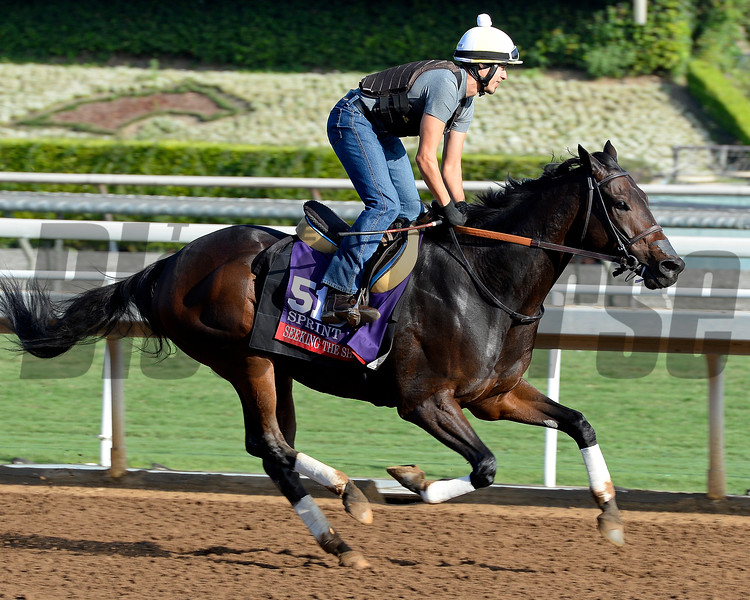 Seeking the Sherriff on Oct. 26, 2014, at Santa Anita in preparation for the Breeders' Cup.<br /> 2Origs10_26_14 image574<br /> Anne M. Eberhardt photo