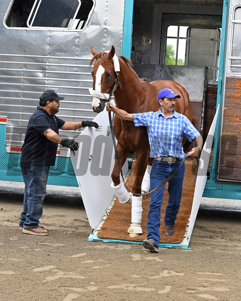 California Chrome arrives at Santa Anita.<br /> Works at Santa Anita in preparation for 2016 Breeders' Cup on Oct. 30, 2016, in Arcadia, CA.