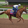 Lord Nelson<br /> Works at Santa Anita in preparation for 2016 Breeders' Cup on Oct. 30, 2016, in Arcadia, CA.