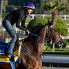 Caption:  Imperative<br /> Scenes at Santa Anita  on Oct. 27, 2014, in preparation for Breeders' Cup  in California.<br /> 1Origs10_28_14 image341<br /> Photo by Anne M. Eberhardt