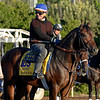 Caption:  Bayern<br /> Scenes at Santa Anita  on Oct. 27, 2014, in preparation for Breeders' Cup  in California.<br /> 1Origs10_28_14 image260<br /> Photo by Anne M. Eberhardt