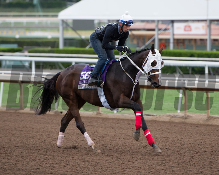 Paola Queen<br /> Works at Santa Anita in preparation for 2016 Breeders' Cup on Oct. 30, 2016, in Arcadia, CA.