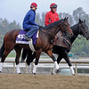 Caption:  No Jet Lag<br /> Breeders' Cup horses and connections at Santa Anita near Acadia, California, preparing for Breeders' Cup raceways on Nov. 1 and Nov. 2, 2013.<br /> BCWorks01_10_25_13 JPEGSimage454<br /> Photo by Anne M. Eberhardt