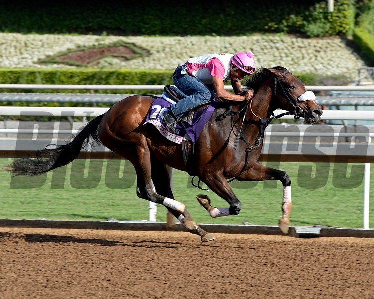 Caption:  Wonder Gal<br /> Scenes at Santa Anita in preparation for Breeders' Cup  in California on Oct. 27, 2014.<br /> 1Origs10_27_14 image985<br /> Photo by Anne M. Eberhardt