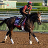 Caption:  Conquest Harlanate<br /> Scenes at Santa Anita in preparation for Breeders' Cup  in California on Oct. 27, 2014.<br /> 1Origs10_27_14 image745<br /> Photo by Anne M. Eberhardt